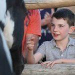 Boy meeting horse