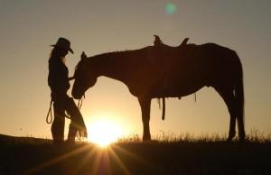 horse in sun
